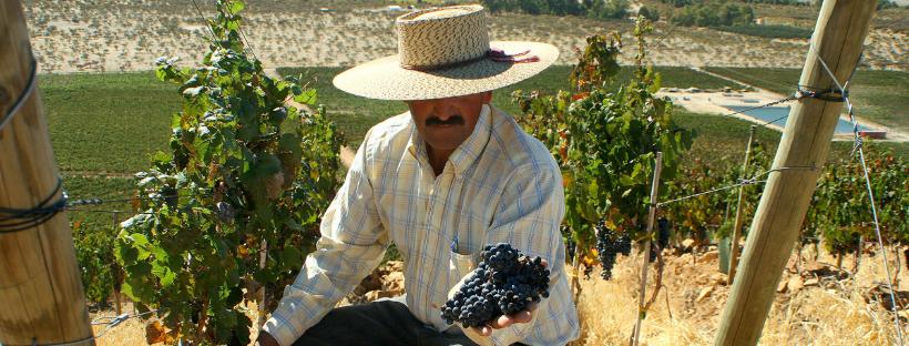Chileens wijnhuis Casas Patronales maakt wijnen in perfecte harmonie