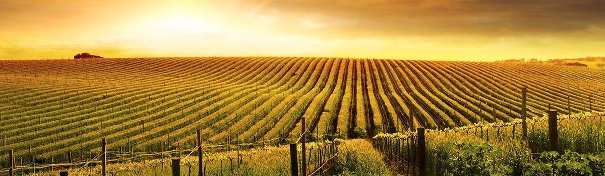 Fruitige & bloemige witte wijn