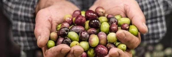 olijfolie met eigen etiket